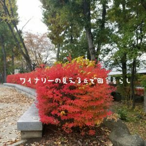 inaka-wineryhills_20171104_20_toumi_central_park_kouyou
