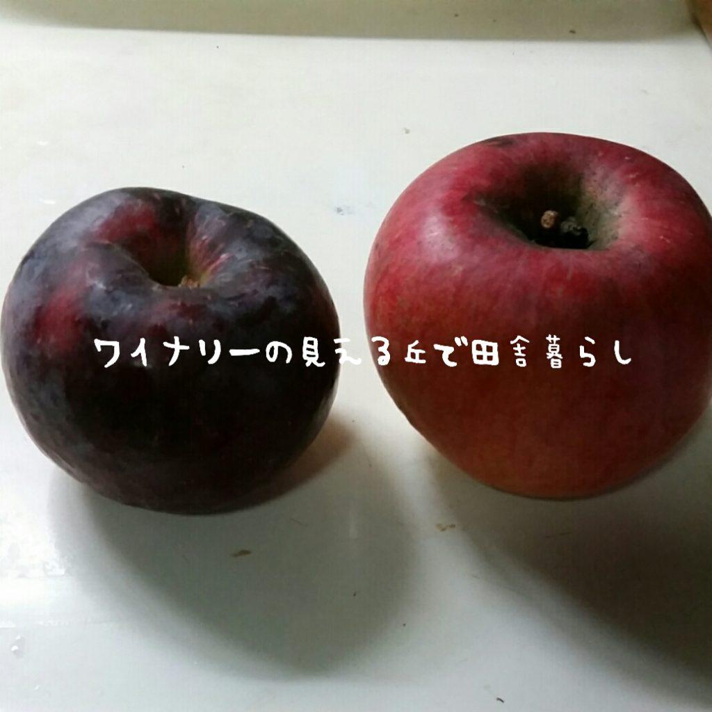 新品種?トウカという名前の新しい赤いりんご。