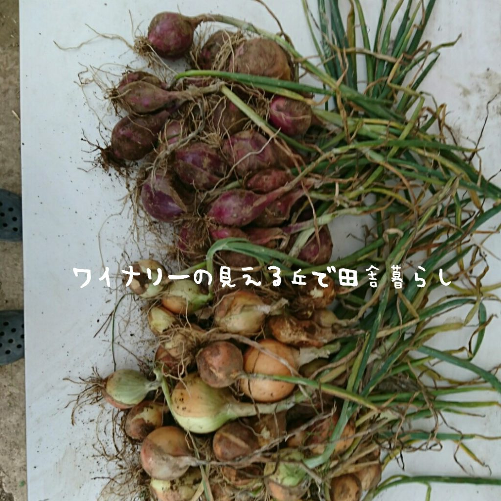 7月3日の収穫は3回!秋収穫のための土地を作ります。