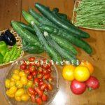 7月25日はたくさん収穫できました