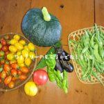 8月2日の収穫物