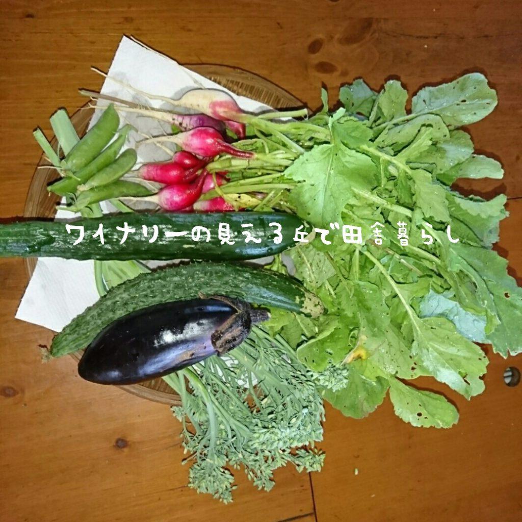 6月30日は雨がやんだ中で草取り。夕方は冷えた体を温めに温泉へ。