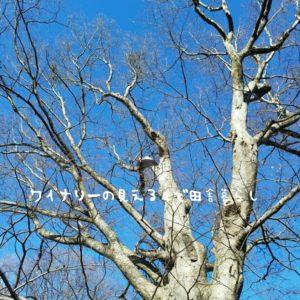 inaka-wineryhills_20180101_unnnojyuku10