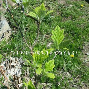 inaka-wineryhills_20180428_05