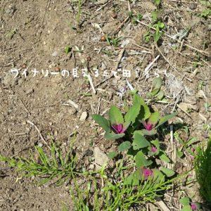 inaka-wineryhills_20180428_79