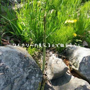 inaka-wineryhills_20180428_85