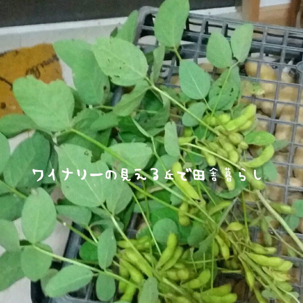 8月11日の夕飯は畑の無農薬野菜で成り立ちました。
