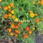 長野県の夏2018年。山の日の庭の模様。
