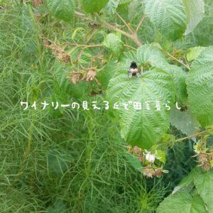 inaka-wineryhills_20180811_10-min
