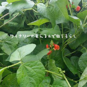 inaka-wineryhills_20180811_20-min