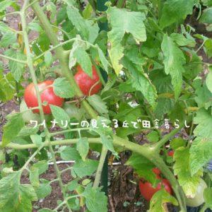 inaka-wineryhills_20180811_30-min