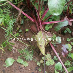 inaka-wineryhills_20180811_43-min