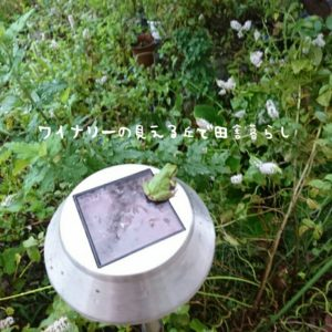 inaka-wineryhills_20180901_01-min