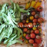 9月5日は2回収穫しました。カラートマトが多いです。