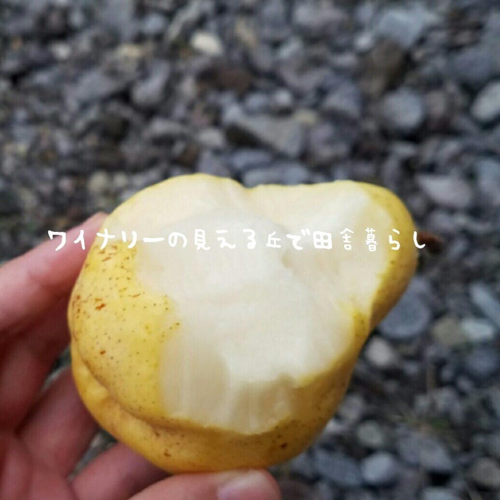 あさつゆでは西洋梨オーロラ祭り開催しているよ!