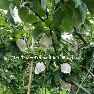 inaka-wineryhills_20180915_asatuyu06-min
