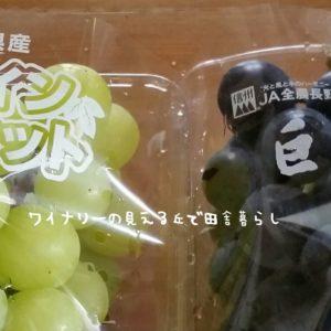 inaka-wineryhills_20180915_grapefes21-min