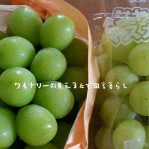inaka-wineryhills_20180915_grapefes22-min
