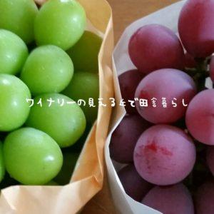 inaka-wineryhills_20180915_grapefes24-min