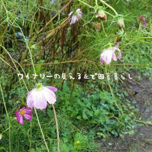 inaka-wineryhills_20180915_inaka06-min