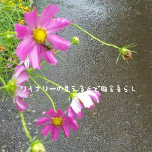 inaka-wineryhills_20180915_inaka26-min