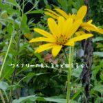 長野県の夏2018年。敬老の日前後の庭の模様。