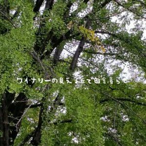 inaka-wineryhills_20180915_sanada07-min