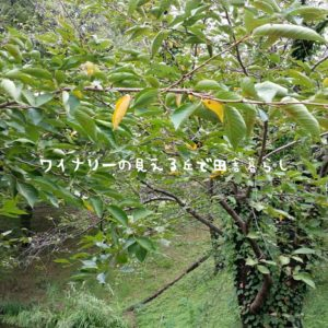 inaka-wineryhills_20180915_sanada13-min