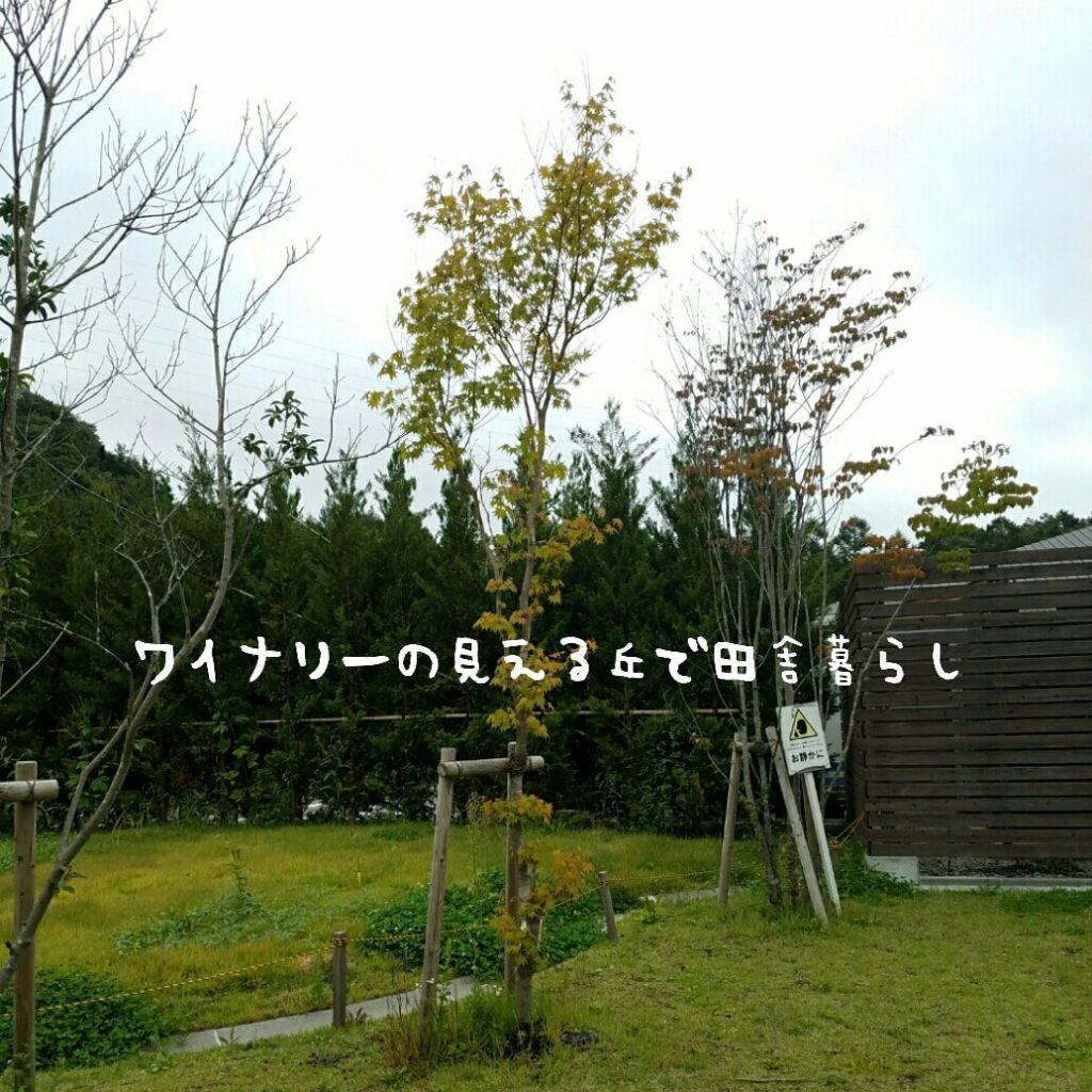 軽井沢発地付近、小さな秋、紅葉も始まりました。