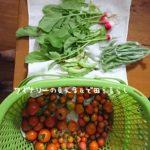 9月26日は野菜の出荷。