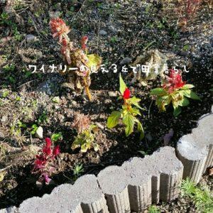 inaka-wineryhills_20181103_02-min