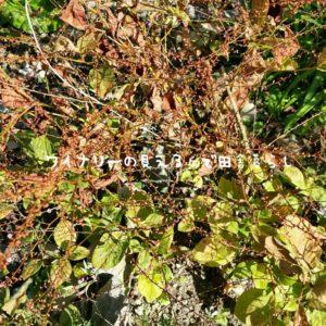 inaka-wineryhills_20181103_07-min