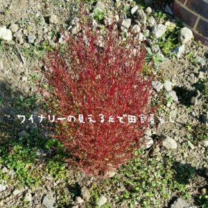 inaka-wineryhills_20181103_11-min